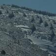 樹氷とニホンジカ