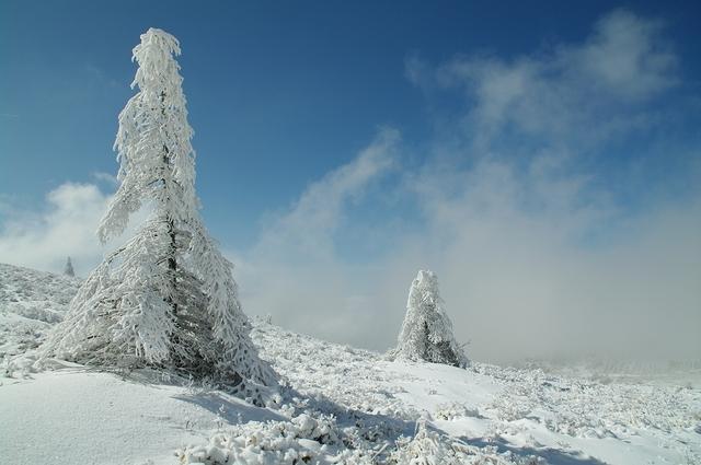 雪原と樹氷