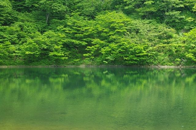 新緑の夜叉ヶ池
