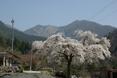 Sakura_to_kitayuumoriyama