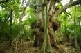 Nzxmas_tree