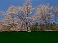 Sakura_to_aozora
